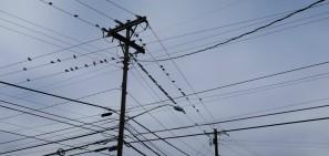 telegraph-lines-pigeons
